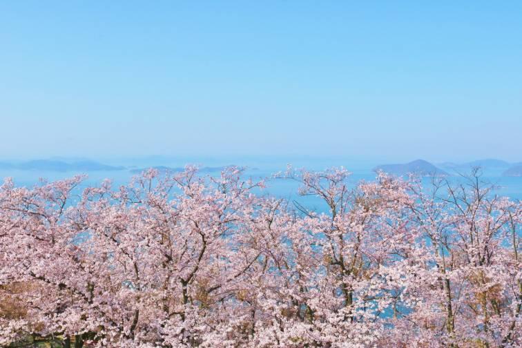 Mitoyo / Shonai Peninsula|三豊
