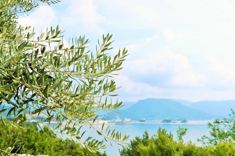 쇼도시마 온천향|小豆島温泉郷