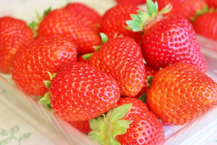 草莓屋 天空農場